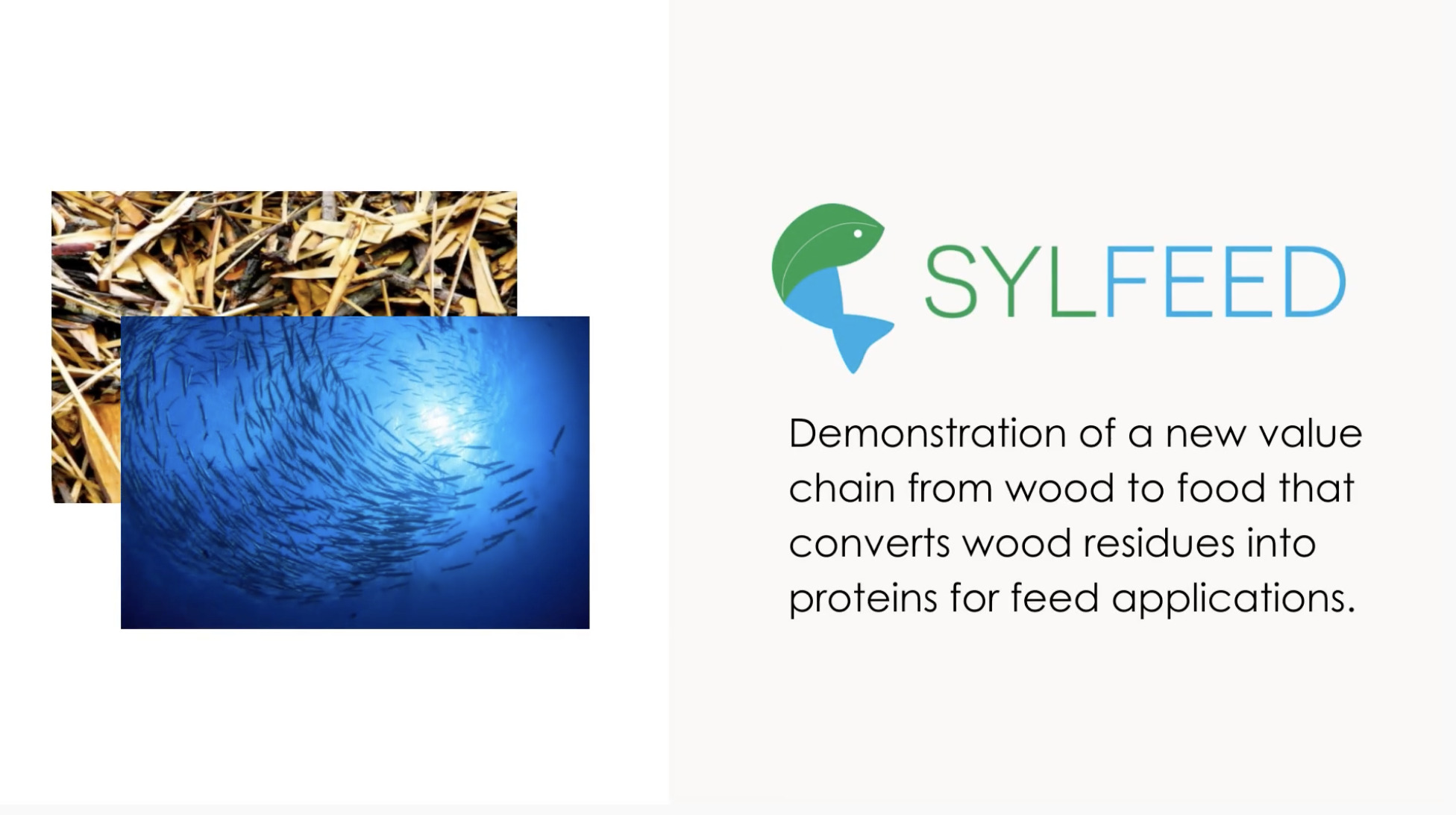Video Presentation of the Final Results of the SYLFEED Project